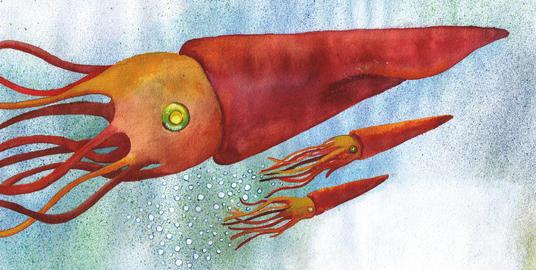 Bog illustration