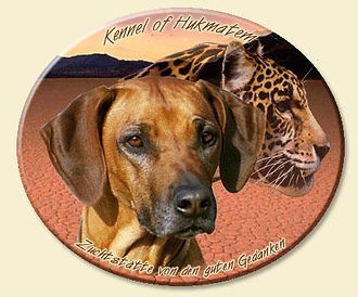 Rhodesian Ridgeback - Kennel of Hukmatem