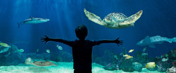 Vancouver Aquarium _InspirationPass_