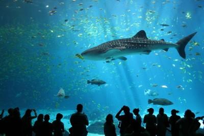 Vancouver Aquarium Shark