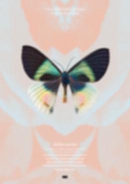 Thea Sonderegger, Plakat Alcides Aurora, Schmetterling