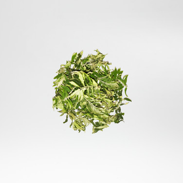 Rowan leaves