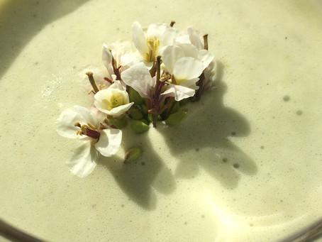 Le diplotaxis erucoides ou roquette blanche.