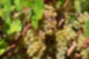 vin-bergerac-monbazillac-gerales-DSC_413