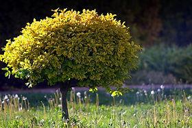 petit arbre pixabay copie.jpeg