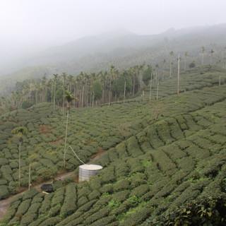 tea10.jpg