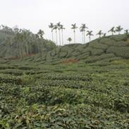 tea9.jpg