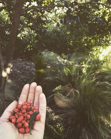 First Goji berry harvest from our little