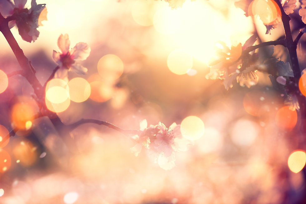 Spring blossom background. Beautiful nat