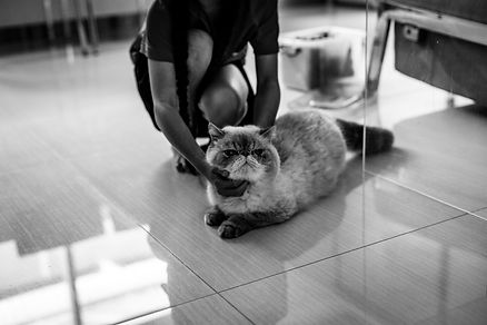 Cat and her owner patting him