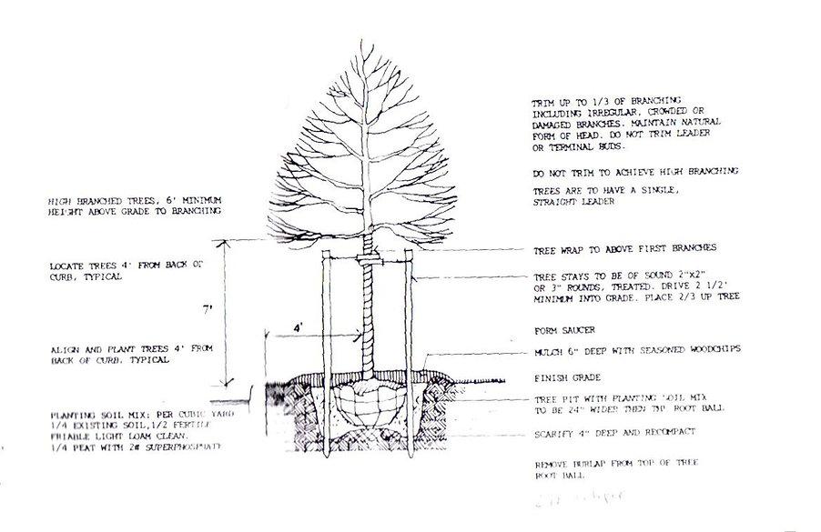 tree rules29.jpg