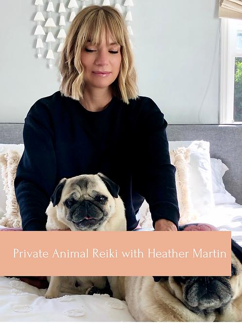 30min Animal Reiki Session with Heather Martin