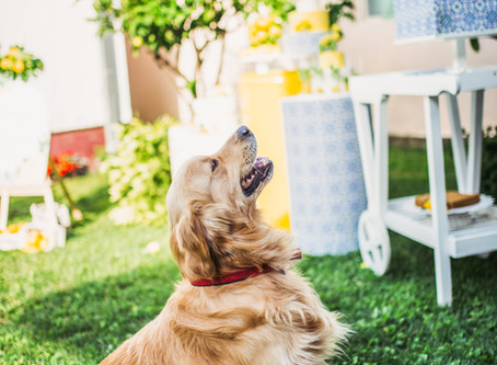 How to moderate your dog's behaviour
