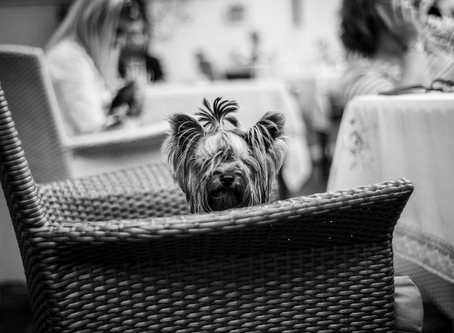 The best dog friendly eateries in Bournemouth and Poole in 2020!