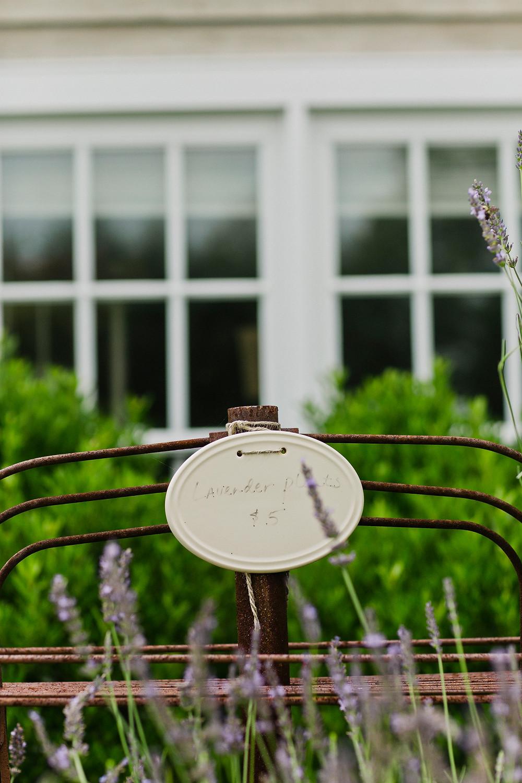 PA Engagement Lavender Farms2
