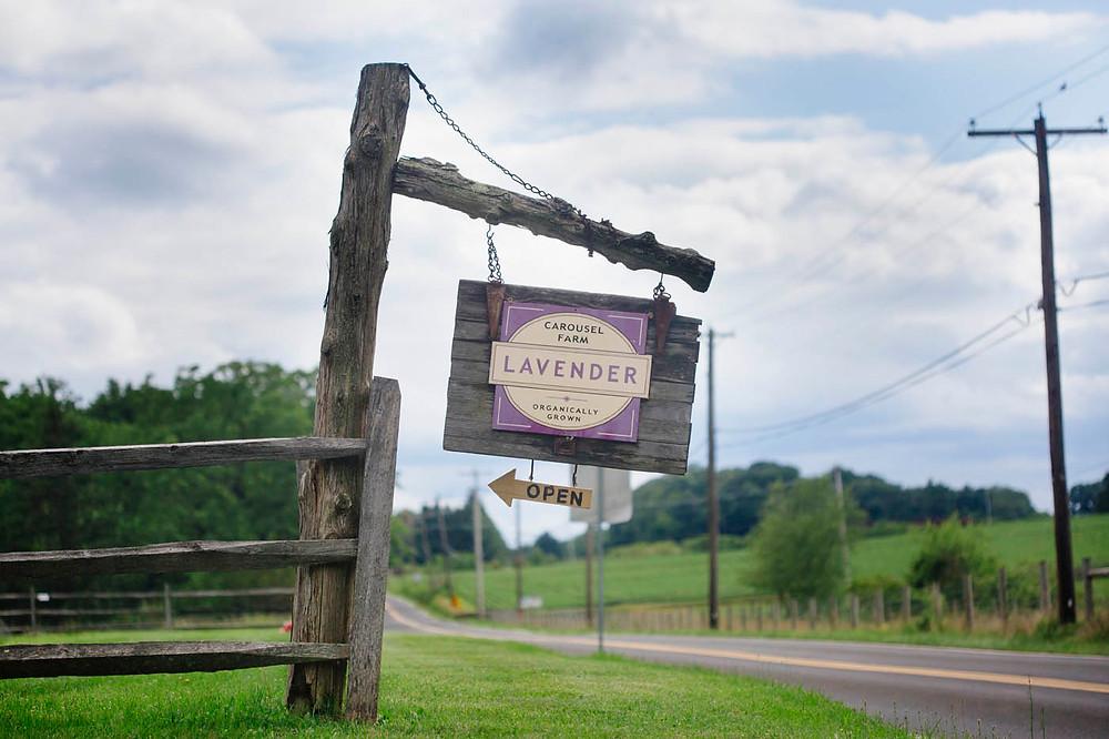 PA Engagement Lavender Farms