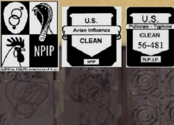 NPIP #56-481