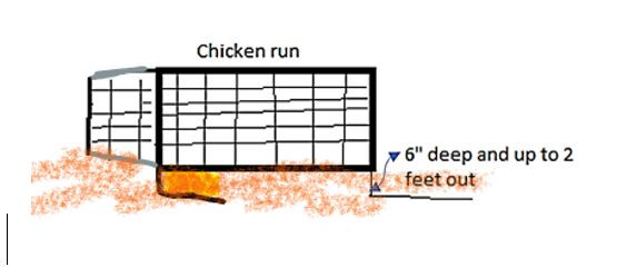 Chicken run safety