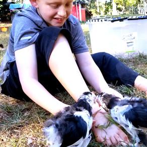 Start a Poultry Farm Business