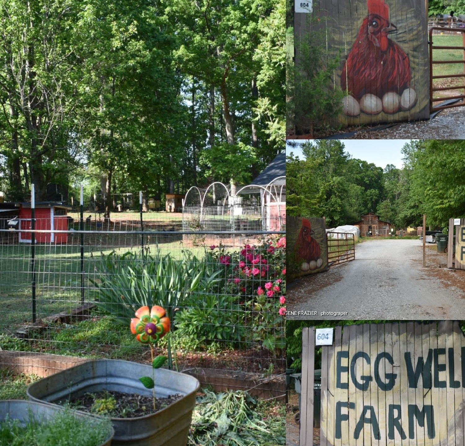 Egg Well Farm