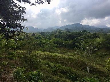 rainforest_columbia.jpg