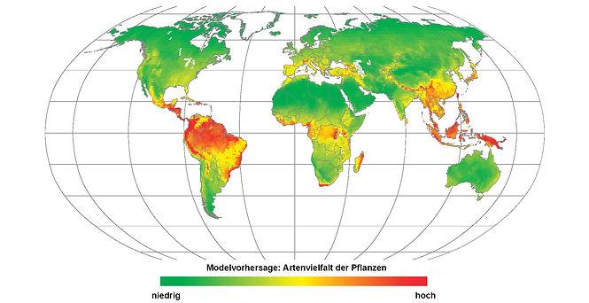 Artenvielfalt der Pflanzen.jpg