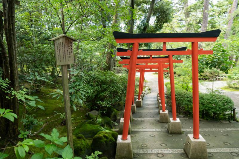 金澤神社_D5J1479-800p.jpg