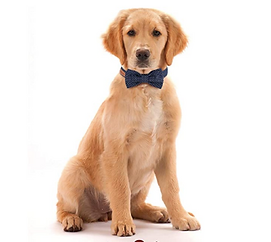 Dog Bowtie Collar 2.png
