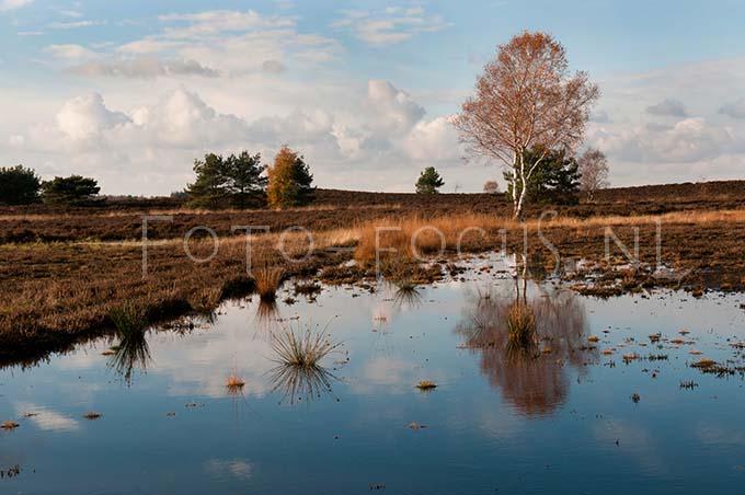 Landscape Color 20.jpg