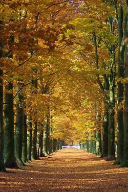 Landscape Color 55
