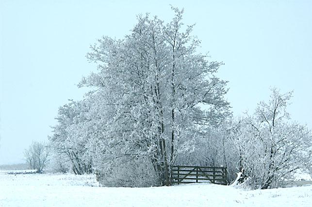 winter Den Donk