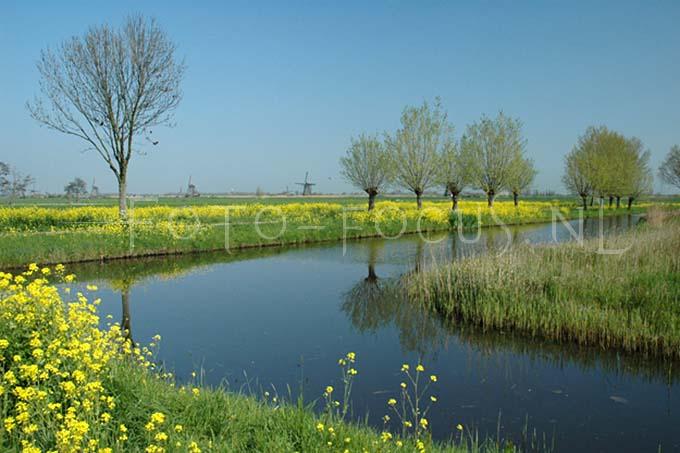 Landscape Color 26.JPG