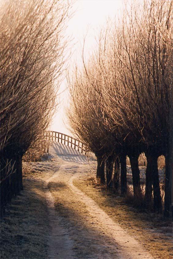 pad met brug