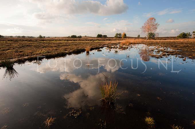 Landscape Color 25.jpg