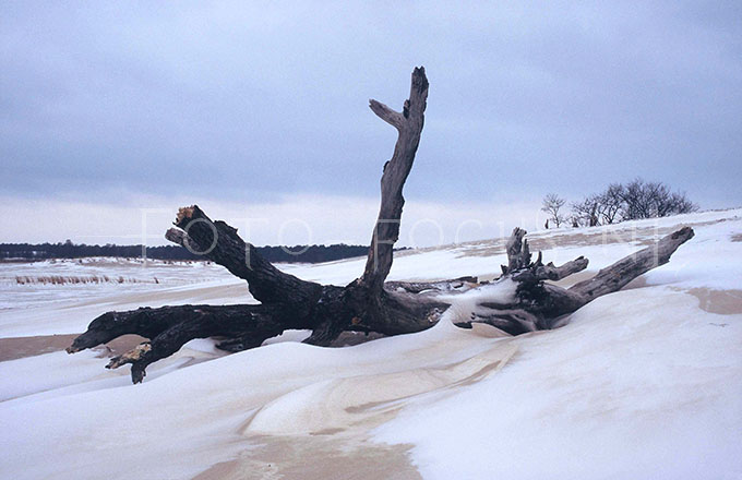 Winterlandscape Color 05.jpg