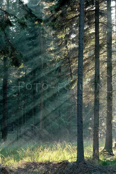 Landscape Color 10.jpg