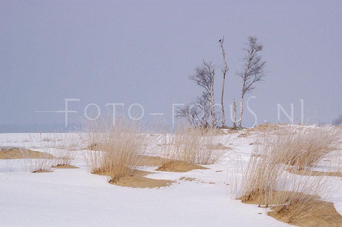 Winterlandscape Color 29.jpg