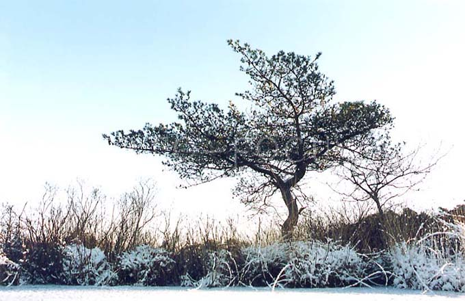 Winterlandscape Color 08.jpg