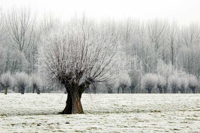 Winterlandscape Color 03.jpg