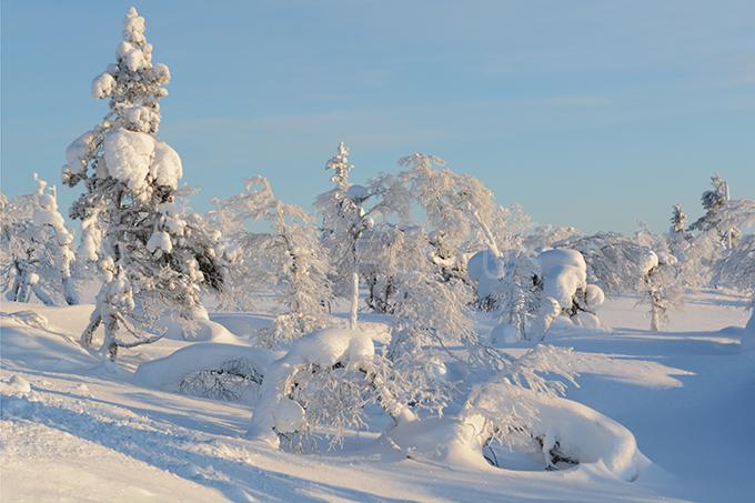 Lapland color 8