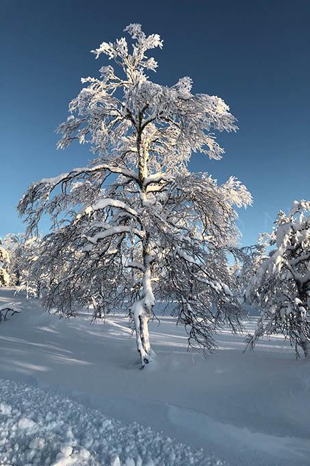 Lapland color 9