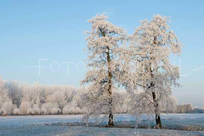 Winterlandscape Color 16.jpg