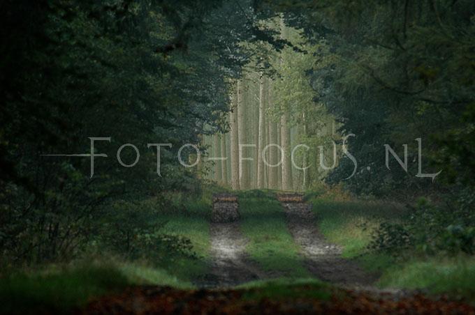 Landscape Color 14.jpg