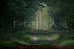 Landscape Color 14