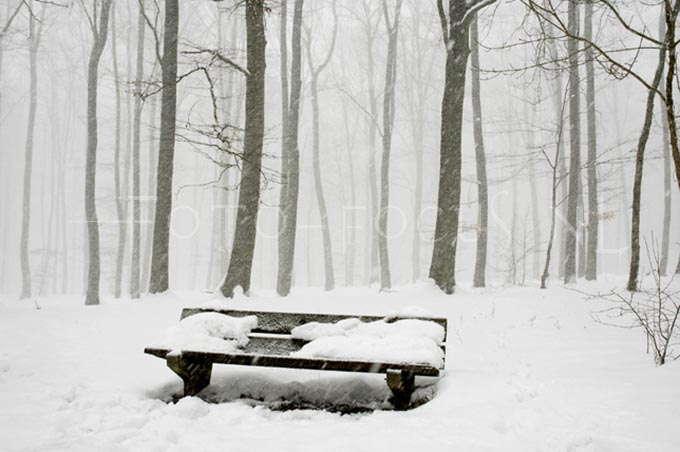 Winterlandscape Color 26.jpg