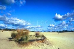 Landscape Color 34