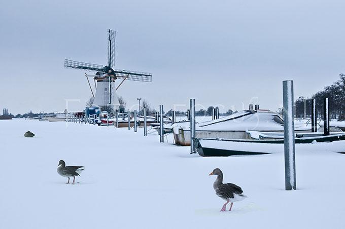 Winterlandscape Color 20.jpg