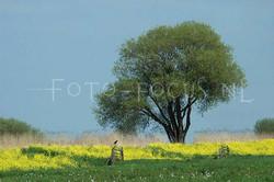 Landscape Color 13