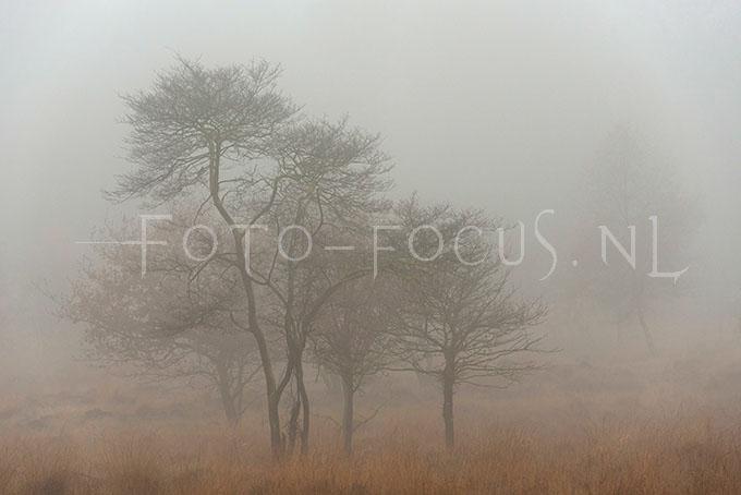 Landscape Color 06.jpg
