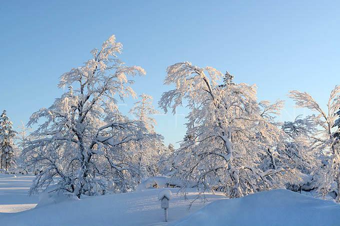 Lapland color 011